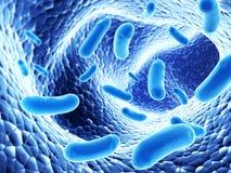 Kolonie von bacterias lizenzfreie abbildung