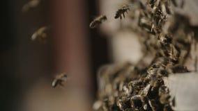 Kolonie von Bienen stock video footage
