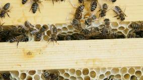 Kolonie von den Bienen, die in einem Bienenstock arbeiten stock video