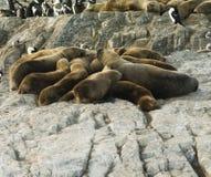 Kolonie von den Seelöwen, die auf einer kleinen Insel auf dem Spürhund-Kanal stillstehen lizenzfreie stockbilder
