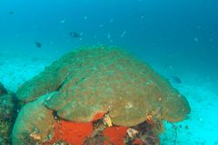 Kolonie von Korallen lizenzfreie stockfotografie