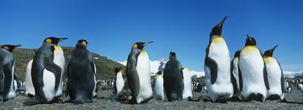 Kolonie von Pinguinen lizenzfreies stockbild