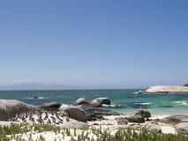 Kolonie von Pinguinen an den Flusssteinen setzen, Cape Town, Südafrika auf den Strand lizenzfreie stockfotos