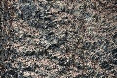 Kolonie von Vögeln in der Arktis stockfotos