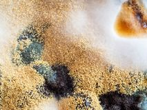 Kolonies van micro-organismen Vorm bij de jam Lage diepte van gebied Hoogste mening stock afbeelding