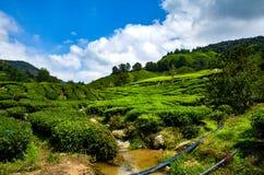 Kolonilandskap på den soliga dagen på Cameron Highland, Malaysia Arkivfoton