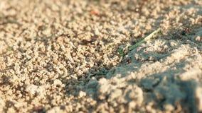 Kolonimyror bär tillförsel i ett hål i jordnärbilden lager videofilmer