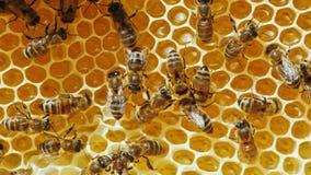 Kolonin av honungbin som arbetar på honungskakor Royaltyfri Foto