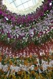 Kolonn av orkidér Arkivfoton