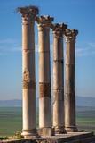 Kolonnad av den Capitoline templet, Volubilis Fotografering för Bildbyråer