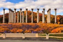 Kolonner för nationell Kapitolium för Washington DC i höst royaltyfria bilder