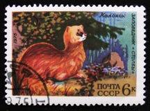 Kolonok在国家公园`专栏`的鼬sibirica,大约1975年 免版税库存图片