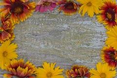 Kolorów żółtych kwiatów rama na nieociosanym starym farby tle Fotografia Royalty Free