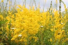 Kolorów żółtych kwiaty Fotografia Royalty Free