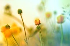 Kolorów żółtych kwiaty Zdjęcie Royalty Free