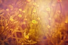 Kolorów żółtych kwiaty Zdjęcia Stock