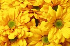 Kolorów żółtych kwiaty Obrazy Royalty Free