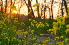 Kolorów żółtych kwiaty obraz stock