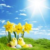 Kolorów żółtych kwiaty i Easter jajka Fotografia Royalty Free