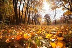 Kolorów żółtych liście Fotografia Stock