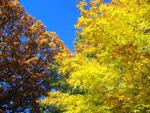 Kolorów żółtych liście zdjęcie stock