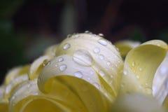 Kolorów żółtych liście 2 Obrazy Royalty Free