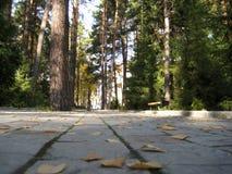 Kolorów żółtych liście na drodze w jesieni Obrazy Stock