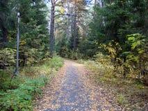 Kolorów żółtych liście na drodze w jesieni Zdjęcie Royalty Free