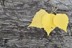 Kolorów żółtych liście na starej desce Obraz Stock