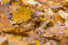 Kolorów żółtych liście na ziemi obraz stock