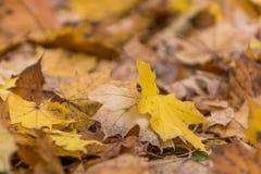 Kolorów żółtych liście na ziemi zdjęcie royalty free