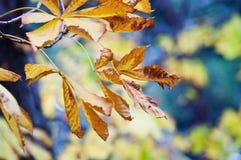 Kolorów żółtych liście w jesieni Zdjęcie Stock