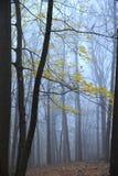 Kolorów żółtych liście w mgłowych zim drewnach obraz stock
