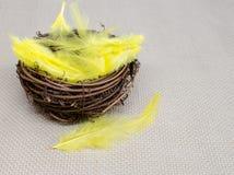 Kolorów żółtych piórka W gniazdeczku Zdjęcia Stock