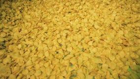 Kolorów żółtych układy scaleni gotujący przy karmową fabryką, poruszającą na długim konwejerze zdjęcie wideo