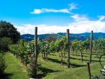 Kolorów gronowi winogrady Zdjęcia Stock