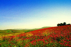 kolorów kwiatów krajobrazowa pairie wiosna dzika Fotografia Royalty Free