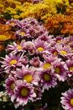 Kolorów kwiaty Fotografia Stock