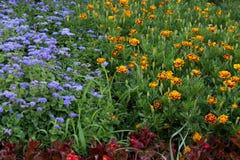 Kolorów kwiaty Zdjęcie Stock