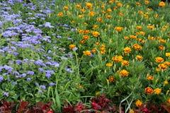 Kolorów kwiaty Zdjęcia Stock