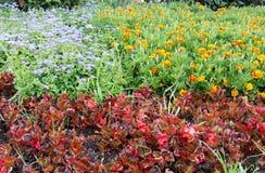 Kolorów kwiaty Obraz Stock