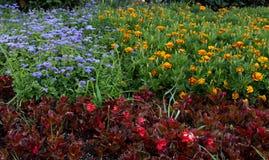 Kolorów kwiaty Zdjęcia Royalty Free