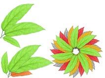 kolorów liść zdjęcie stock