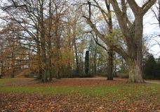 kolorów spadek drzewa Fotografia Stock