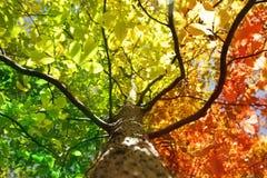kolorów spadek drzewo Zdjęcie Stock