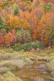 kolorów spadek pastel zdjęcia stock