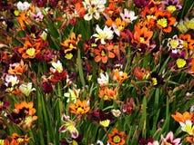 kolor łąkę Fotografia Stock