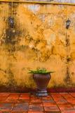 Kolor żółty ściana przy Hoi miasteczko, Wietnam zdjęcia royalty free