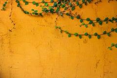 Kolor żółty ściana z drzewami na graniczących ścianach Obrazy Royalty Free