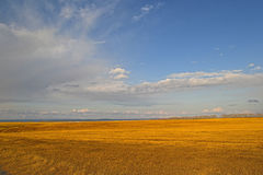 Kolor żółty Śródpolna wczesna wiosna Zdjęcie Stock